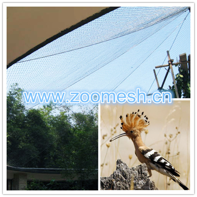 bird cages mesh-hoopoe_副本2.jpg